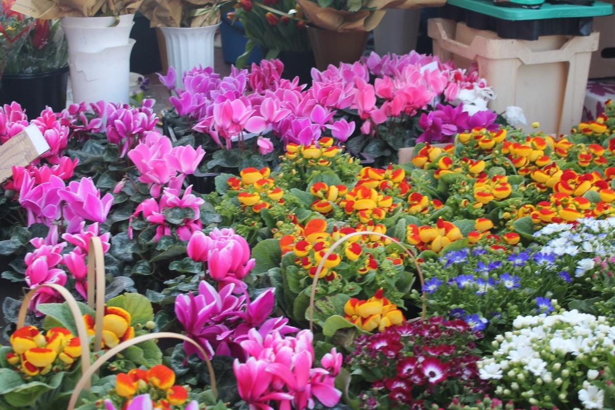Serviciul Fiscal de Stat anunță verificări la comercianții de flori